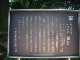 Takaosan_sansaku