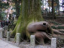 Takaotako01